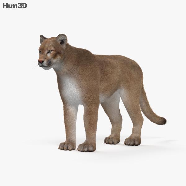 3D model of Cougar HD