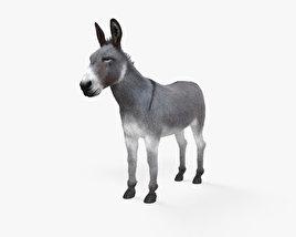 3D model of Donkey HD