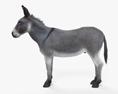 Donkey HD 3d model
