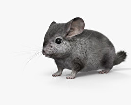 Chinchilla HD 3D model