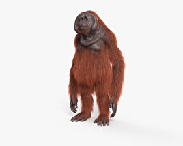 3D model of Orangutan HD