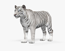 3D model of White Tiger HD