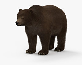 3D model of Grizzly Bear HD