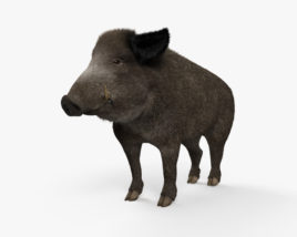 3D model of Wild Boar HD