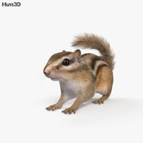 Chipmunk HD 3D model