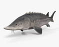 Atlantic Sturgeon HD 3d model
