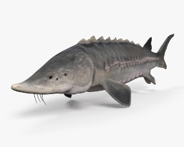 3D model of Atlantic Sturgeon HD