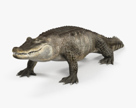 Alligator HD 3D model