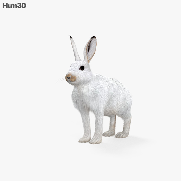 Arctic Hare HD 3D model