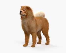 3D model of Chow Chow HD