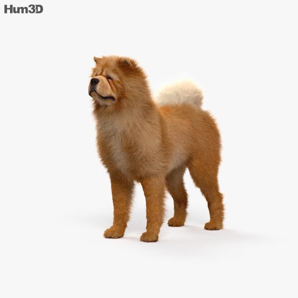 Chow Chow HD 3D model