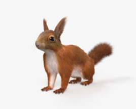 3D model of American Red Squirrel HD