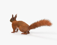 American Red Squirrel HD 3d model