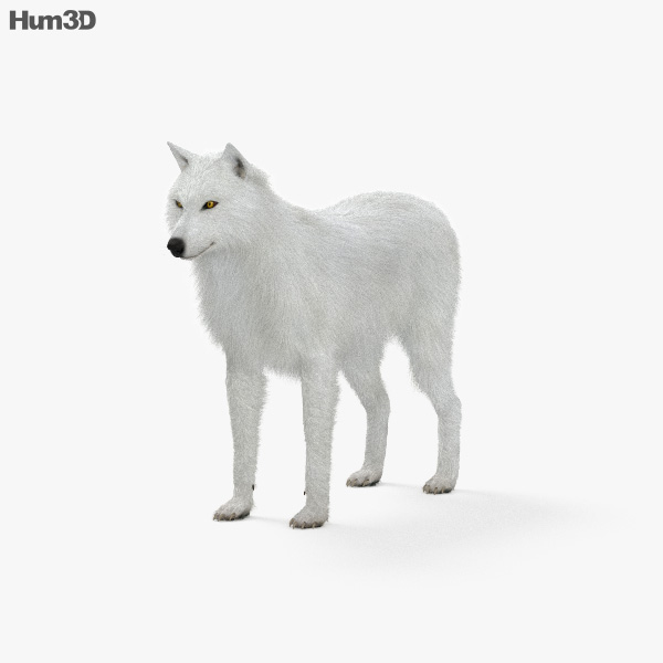 Arctic Wolf HD 3D model