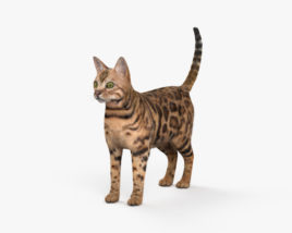 3D model of Bengal Cat HD