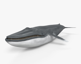 Blue Whale HD 3D model