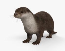 3D model of European Otter HD