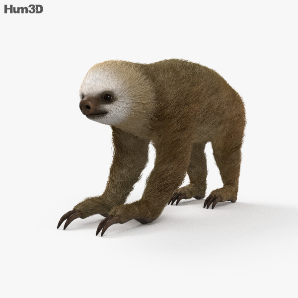 Two-Toed Sloth HD 3D model