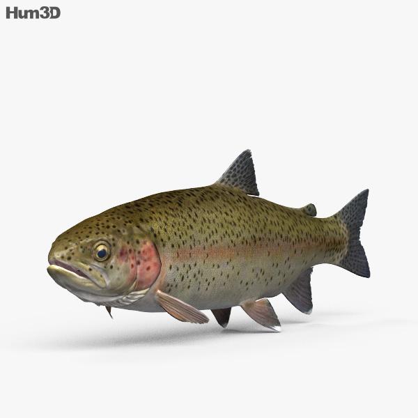 Trout HD 3D model