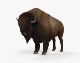 3D model of American Bison (Buffalo) HD