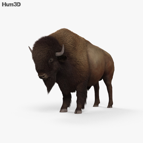 American Bison (Buffalo) HD 3D model