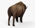 American Bison (Buffalo) HD 3d model