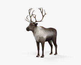 3D model of Reindeer HD