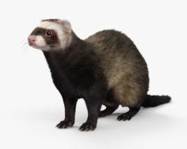 3D model of Ferret HD