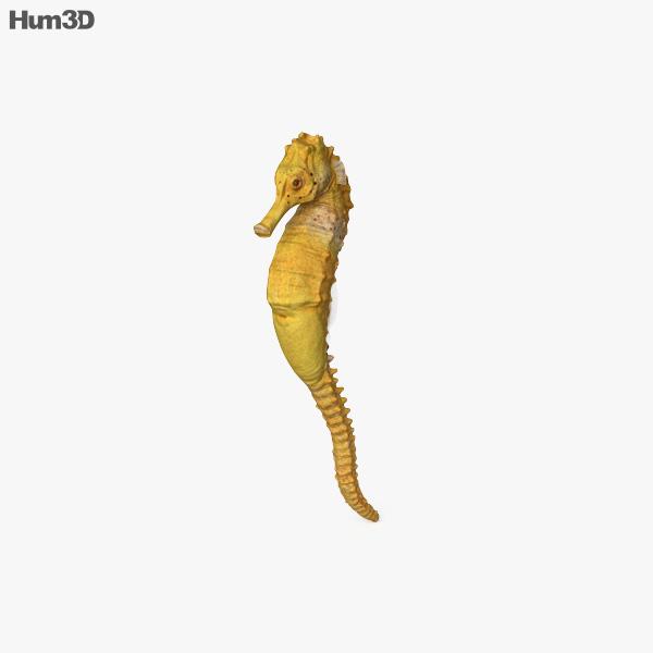 Seahorse HD 3D model