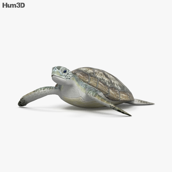 3D model of Hawksbill Sea Turtle HD