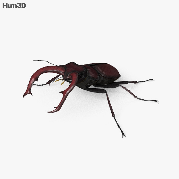 Stag Beetle HD 3D model