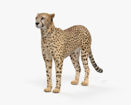 3D model of Cheetah HD