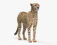Cheetah HD 3d model