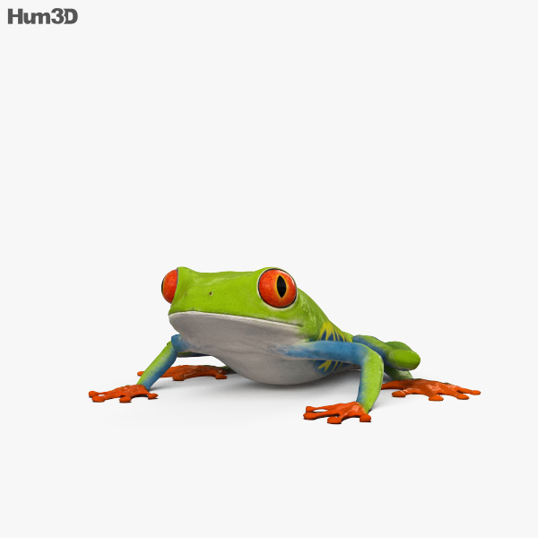 3D model of Tree Frog HD