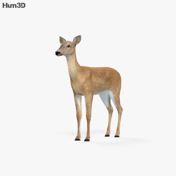 3D model of Doe HD