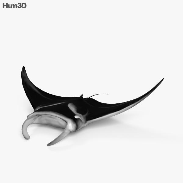 Manta Ray HD 3D model