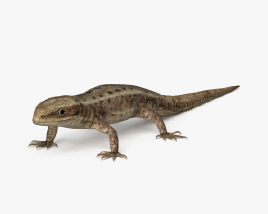 3D model of Common Lizard HD