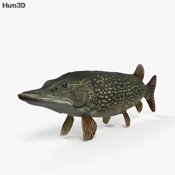 Northern Pike HD 3D model