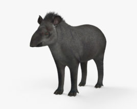 Tapir HD 3D model