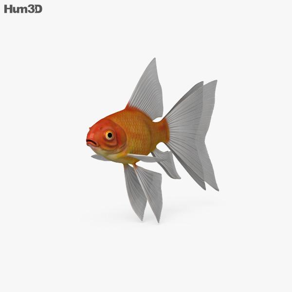 Fantail Goldfish HD 3D model