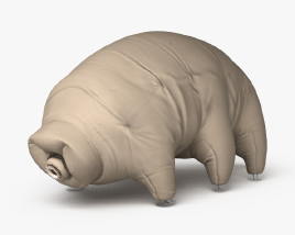 3D model of Tardigrade HD