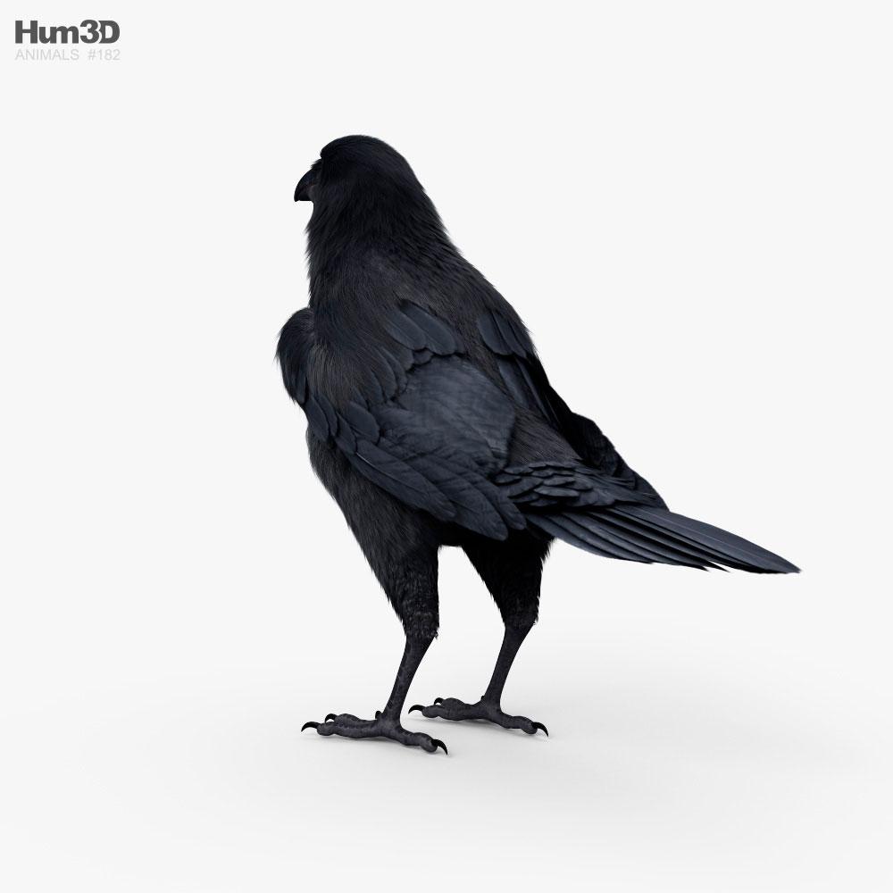 Raven HD 3d model
