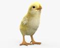 Chick HD 3d model