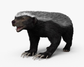 Honey Badger HD 3D model