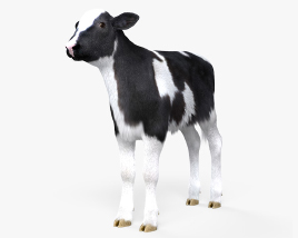 3D model of Calf HD