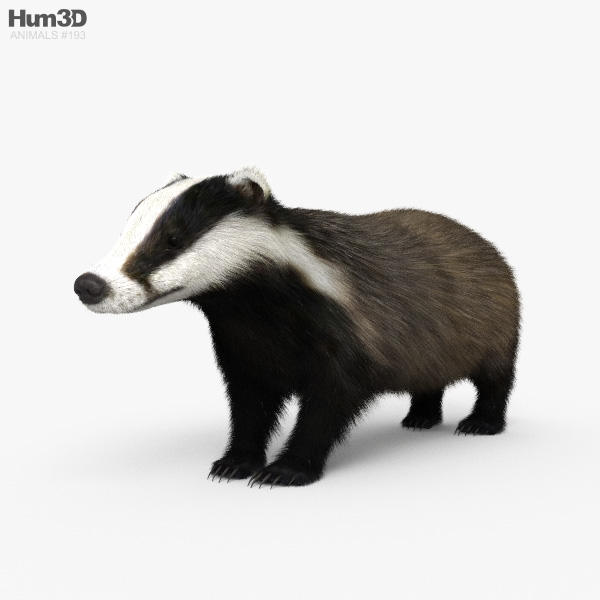Badger HD 3D model