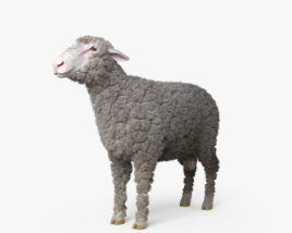 Sheep HD 3D model