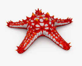 3D model of Red-Knobbed Starfish HD