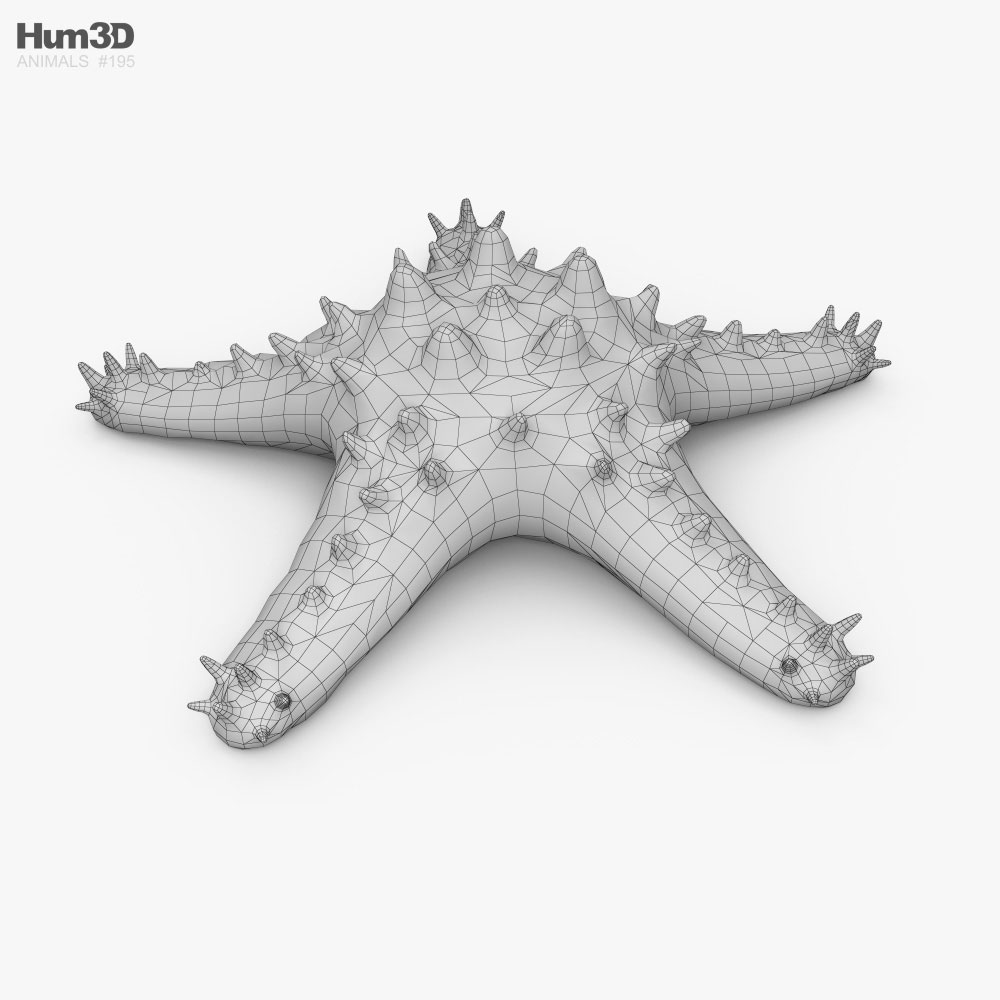 Red-Knobbed Starfish HD 3d model