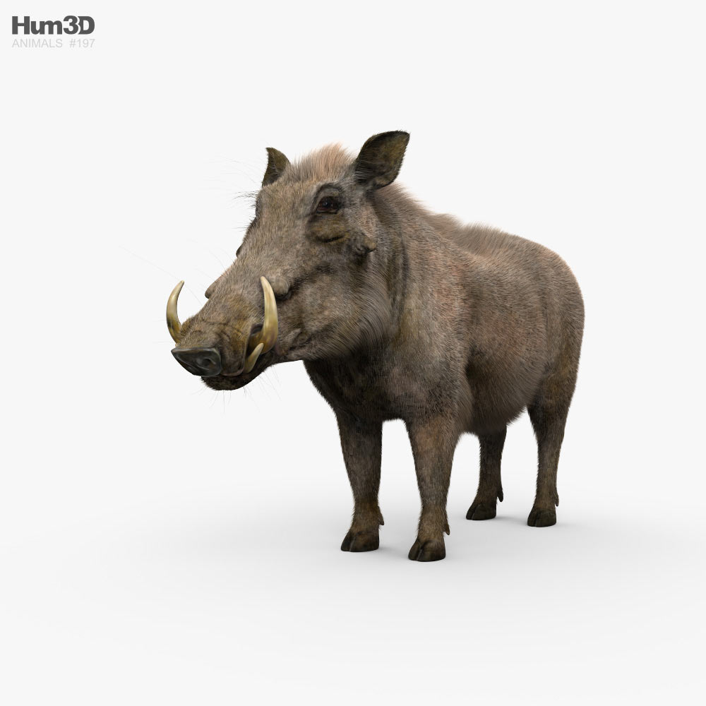 Warthog HD 3D model